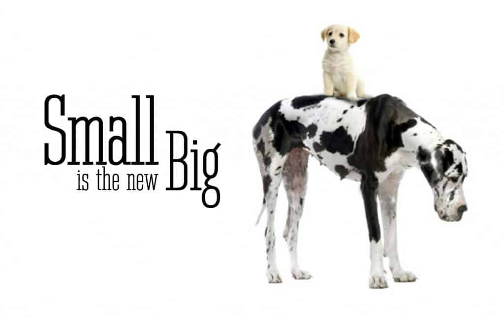 A small dog sitting on top of a big dog
